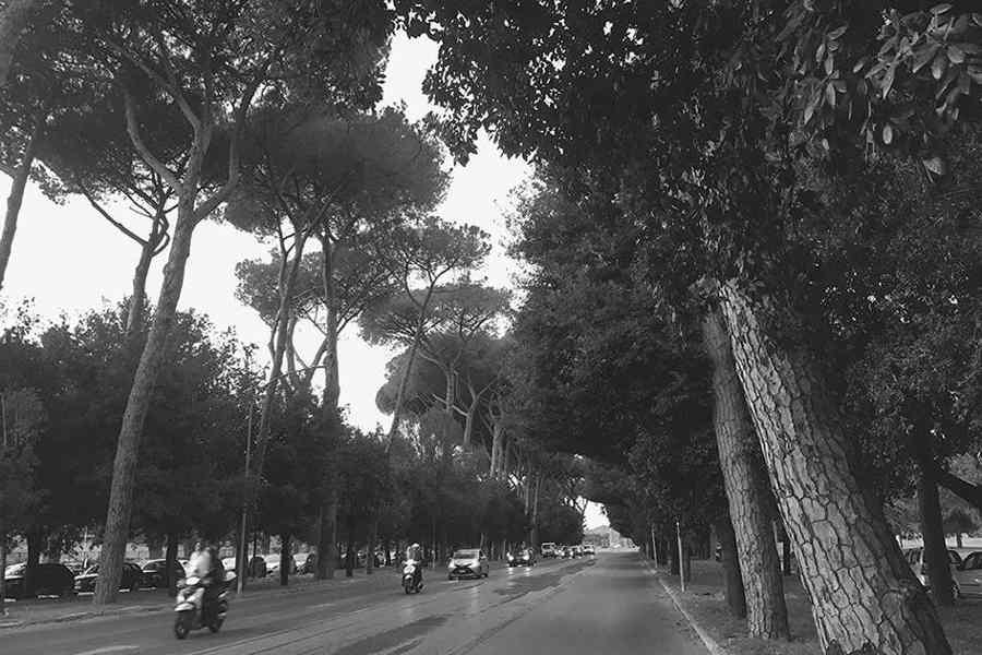 Pini e querce sempreverdi lungo una strada di Roma (Italia). Foto di Giulia Caneva